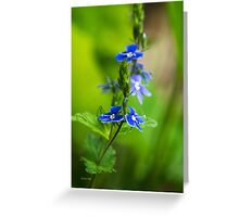 Blue Speedwell Flowers Greeting Card