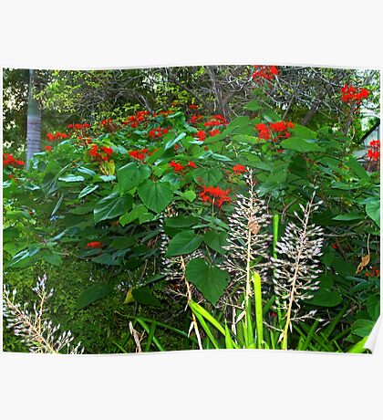 Florida Botanical Gardens Poster