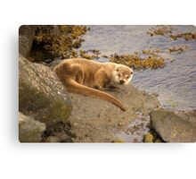 Different Otter,Different Location Canvas Print