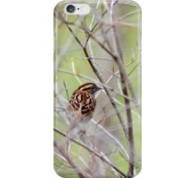 White Throated Sparrow iPhone Case/Skin