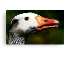 The Greylag Goose Canvas Print