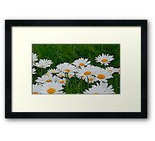 Daisy, Daisy Framed Print
