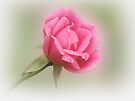 Soft Pink by Sandy Keeton