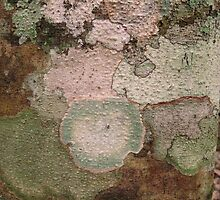 Multi Colored Lichen on a Tree Trunk in the Guatemalan  Jungle  by heatherfriedman
