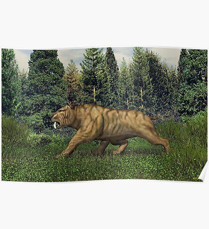 Smilodon (Saber Tooth Tiger) Poster