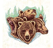 Four Bears (Color) Photographic Print