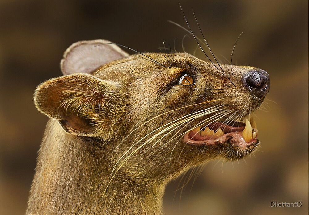 FOSSA Cryptoprocta ferox (NOT A PHOTOGRAPH) by DilettantO