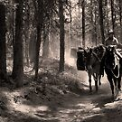 Pack Horses by JamesA1