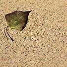 Sandy Leaf by Carrie Bonham