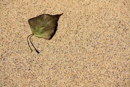Sandy Leaf by Carrie Bonham