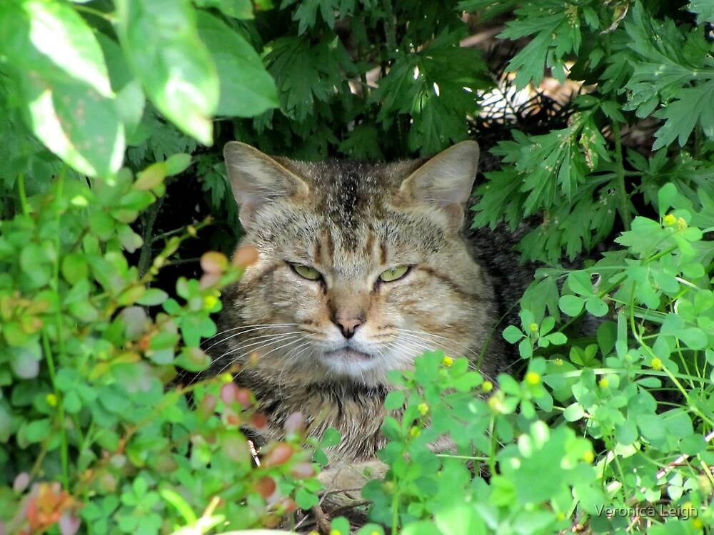 Neighborhood Stalker by Veronica Schultz
