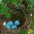 Sparrow eggs..... by Betty Maxey