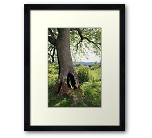 Welsh Nature Framed Print