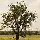 Lone tree near Oz by agenttomcat