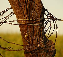 Barbed wire wrapped around a post by agenttomcat