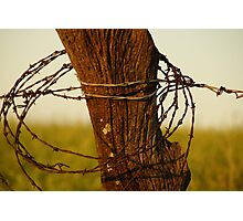 Barbed wire wrapped around a post Photographic Print