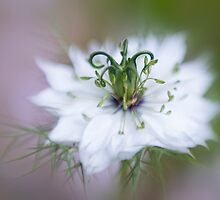 In the mist by Jacky Parker