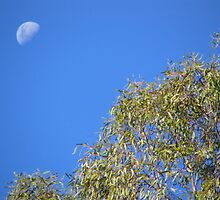the moon lit day by elsha