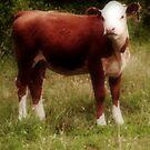 Calf by Susan Grissom