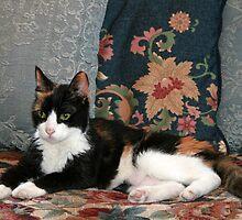 Sirena, My Cat - 18 years old by Nira Dabush
