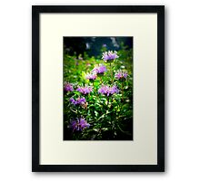 Bee Balm Framed Print
