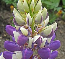 The Voluptuous Lupin by sarnia2