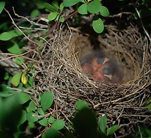 The babies Hatched..... by Betty Maxey