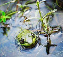 Camouflage Frog  by RavenRidgePhoto