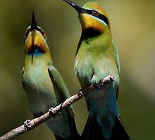 Rainbow Bee-Eaters by Jeremy Weiss