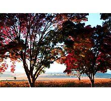 Autumn Sunrise in the Barossa Photographic Print