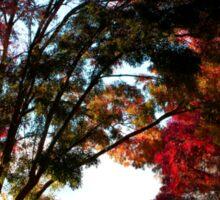 Autumn Sunrise in the Barossa Sticker