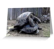 Large Turtle's Mating Greeting Card