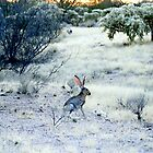 Jack Rabbit at Sunset  by Judy Grant
