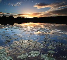Lillypad Sunset by Angus Clyne