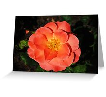 Another Pretty Flower Greeting Card
