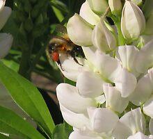 Peek-a-boo I See You-Bumblebee by Michelle Scott