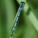 Blue tail by Russell Couch