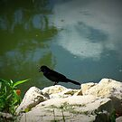 Little bird By The lake by Linda Miller Gesualdo