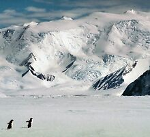 Adelie Penguins at Cape Hallett by Carole-Anne