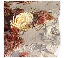 Ocean Rose  Poster