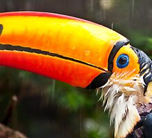 Toucan Play at that Game by Ben Porter