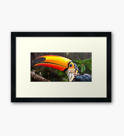 Toucan Play at that Game Framed Print