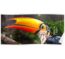 Toucan Play at that Game Poster