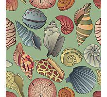 Vintage Seashell Pattern Seamless Photographic Print