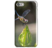 Dasher on Hibiscus Bud iPhone Case/Skin