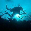 Diver Silhouetted on Reef - Cuyo Island Philippines by Dive Seven .