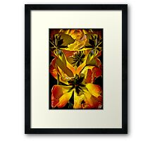 A Fantasy Tangle of Aging Tulips Framed Print