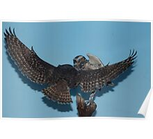 Burrowing Owls Poster
