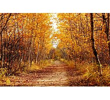 Autumn on the Harte Trail Photographic Print