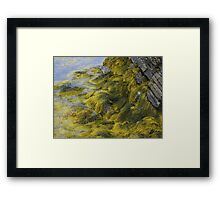 Rocks and Seaweed Framed Print